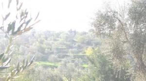 La nebbia in piana degli ulivi